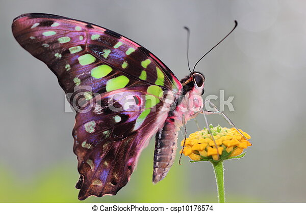 butterfly - csp10176574