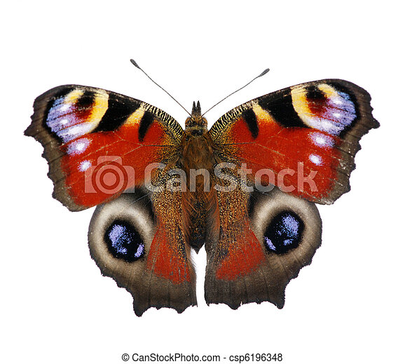 butterfly - csp6196348
