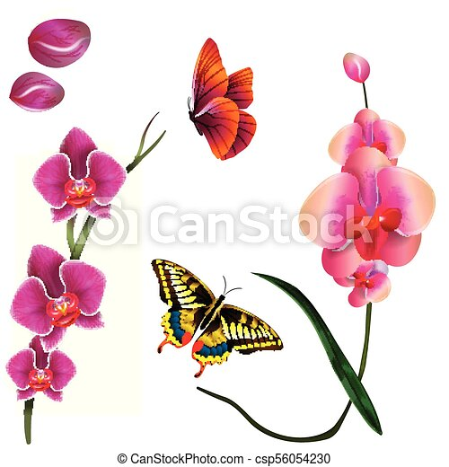 Butterfly Pink Orchid White Background Vector Image - csp56054230