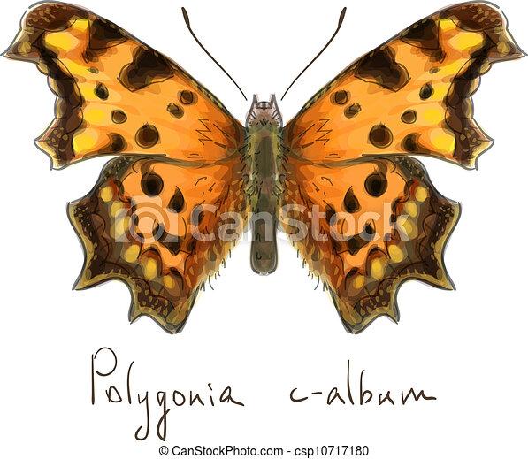 Butterfly Polygonia c-album. Watercolor imitation.  - csp10717180