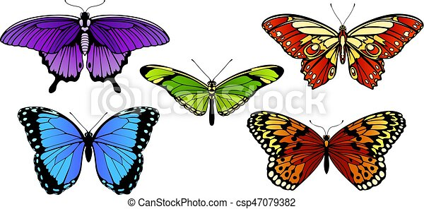 Butterfly Set - csp47079382