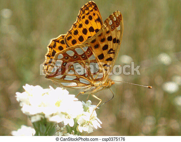 Butterfly - csp0375176