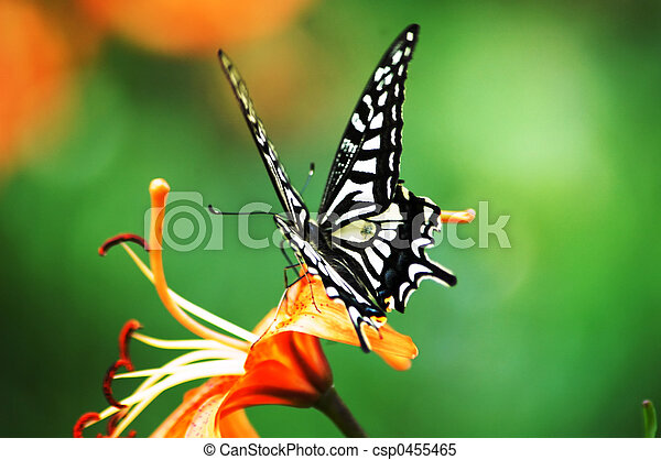 Butterfly - csp0455465