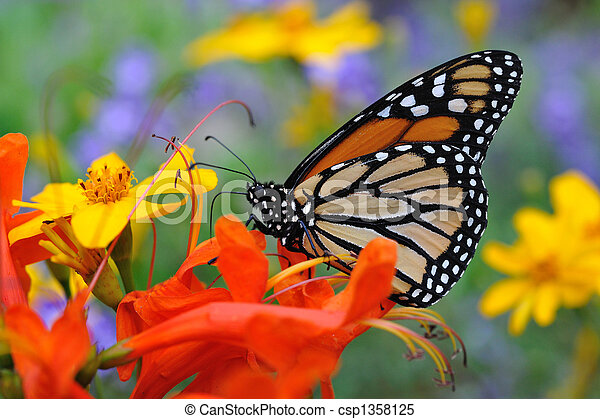 Butterfly - csp1358125