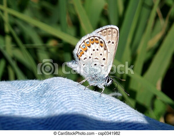 Butterfly - csp0341982
