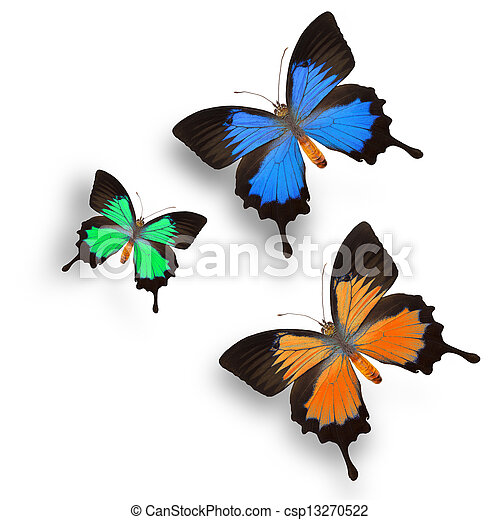 Butterfly  - csp13270522