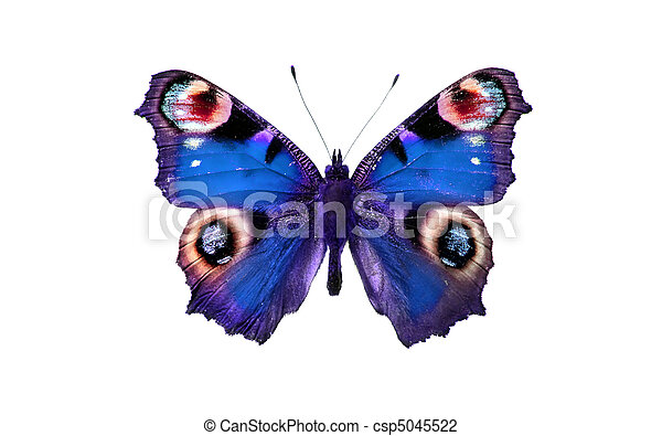 butterfly - csp5045522