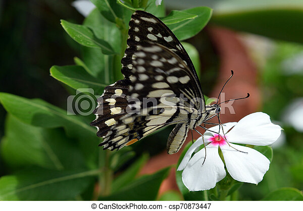 Butterfly - csp70873447