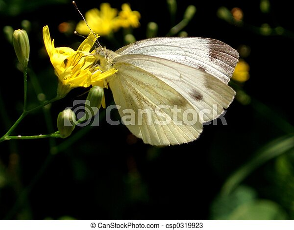 Butterfly - csp0319923
