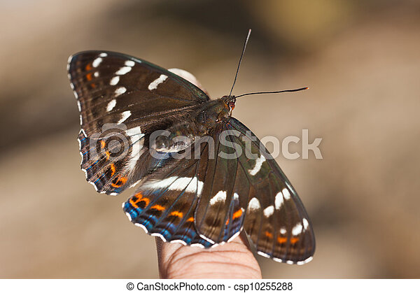 butterfly - the top view - csp10255288