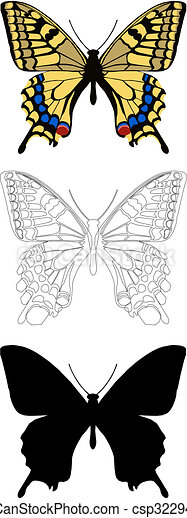 butterfly - csp3229421