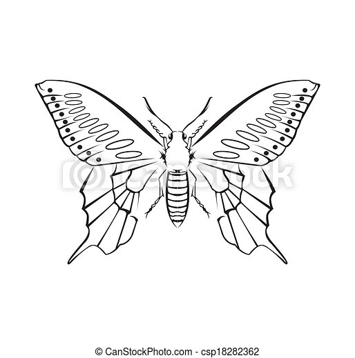 Butterfly Vector Illustration - csp18282362