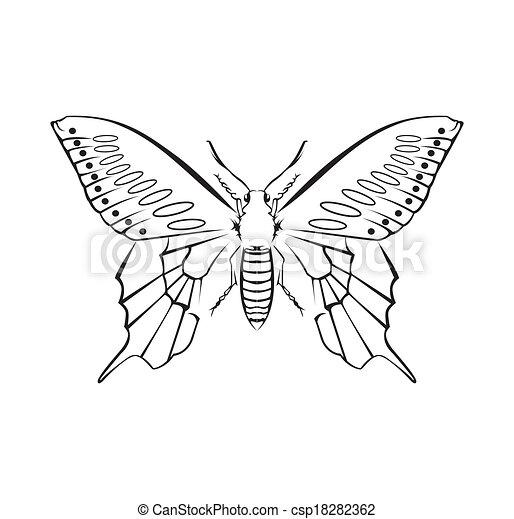 Butterfly Vector Illustration - csp18282362