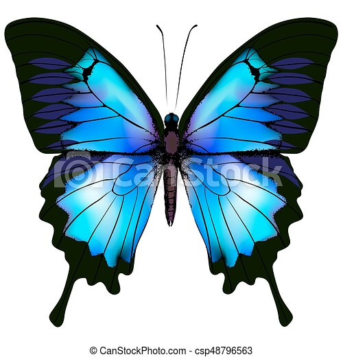 Butterfly vector illustration - csp48796563