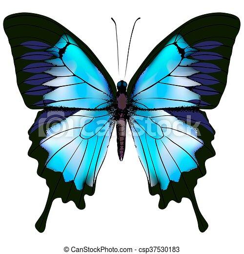 Butterfly vector illustration - csp37530183