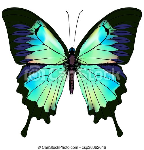 Butterfly vector illustration - csp38062646