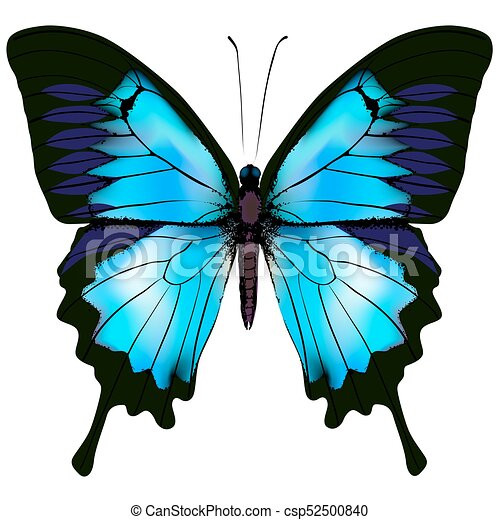 Butterfly vector illustration - csp52500840