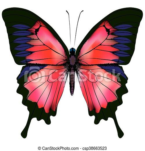 Butterfly. Vector illustration - csp38663523