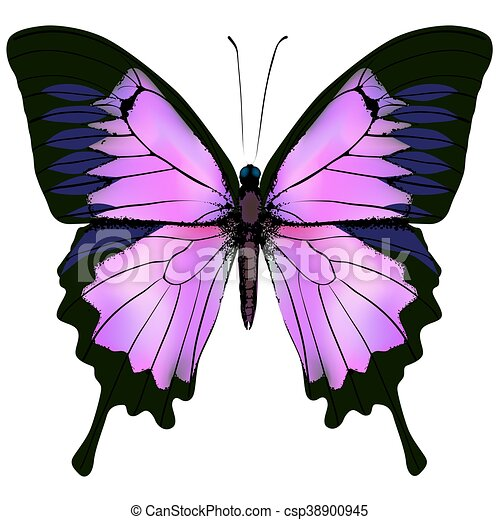 Butterfly. Vector illustration of beautiful pink and purple color - csp38900945