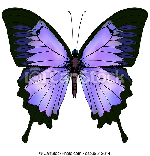 Butterfly. Vector illustration of beautiful pink and purple color - csp39512814