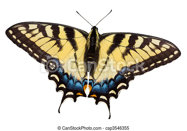 Butterfly - csp3546355
