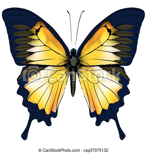 Butterfly. Yellow butterfly isolated illustration on white background - csp37075132