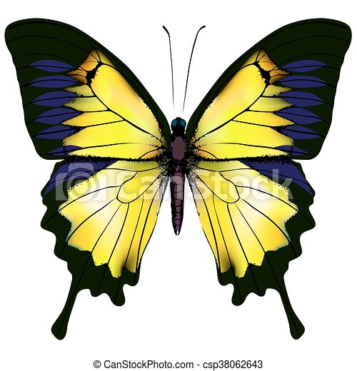 Butterfly. Yellow isolated illustration on white background - csp38062643
