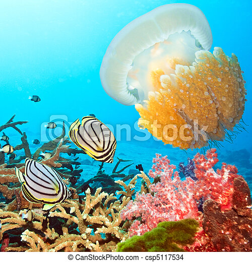Butterflyfishes and jellyfish - csp5117534