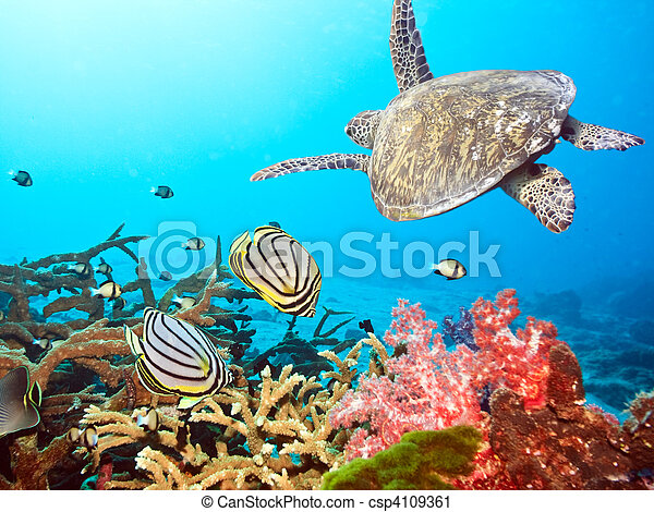 Butterflyfishes and turtle - csp4109361