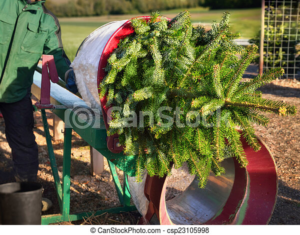 Buying a Christmas tree - csp23105998