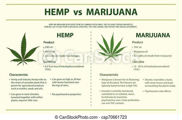 Hemp vs marihuana horizontal - csp70661723