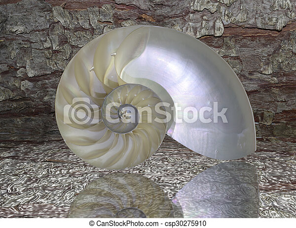 Nautilus concha cortada - csp30275910