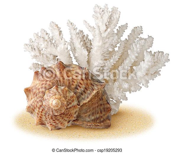 Concha marina - csp19205293