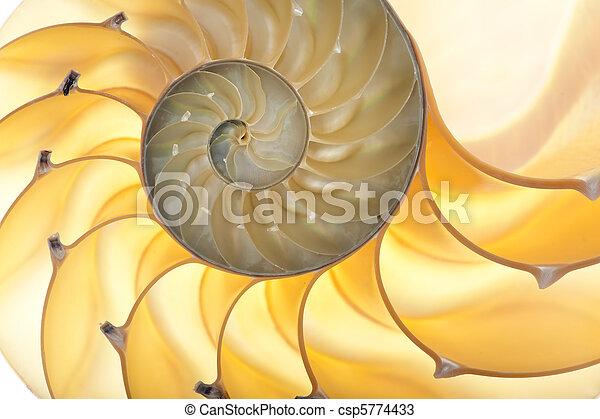 Concha de Nautilus - csp5774433