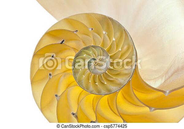 Concha de Nautilus - csp5774425