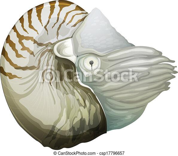 Concha de Nautilus - csp17796657