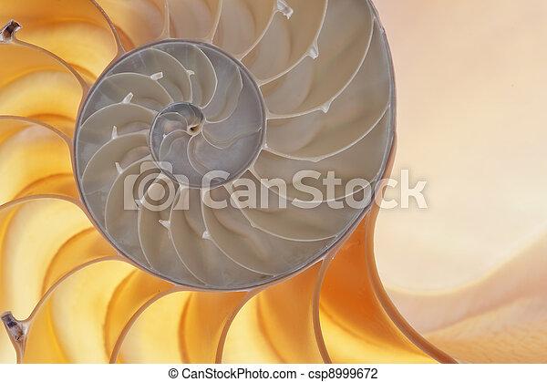 Concha de Nautilus - csp8999672
