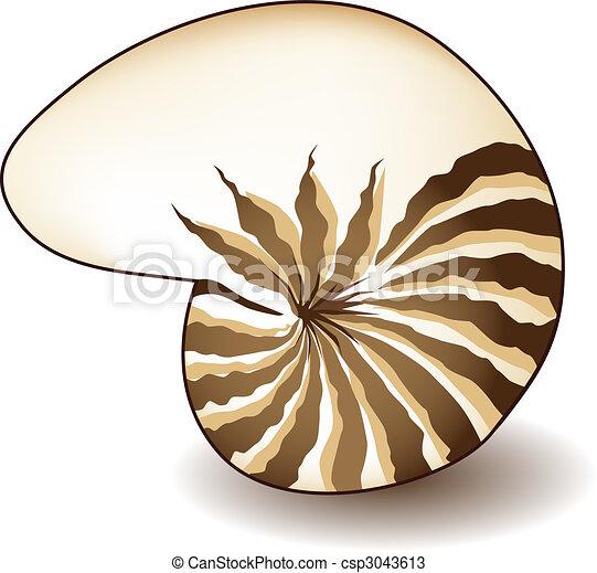 Concha de Nautilus - csp3043613