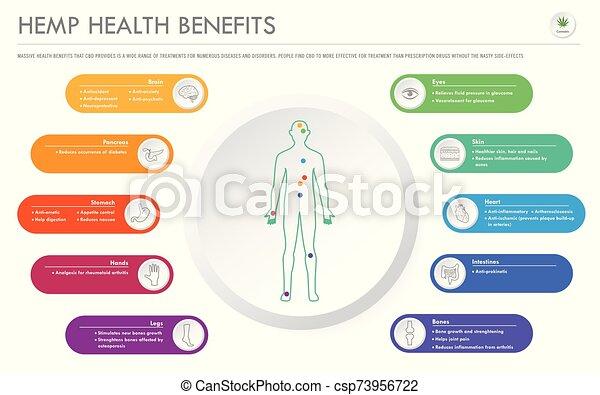 cânhamo, saúde, infographic, horizontais, negócio, benefícios - csp73956722