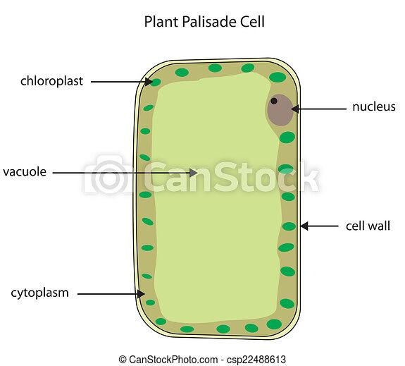 Célula, diagrama, planta, empalizada, etiquetado. Diagrama, planta ...