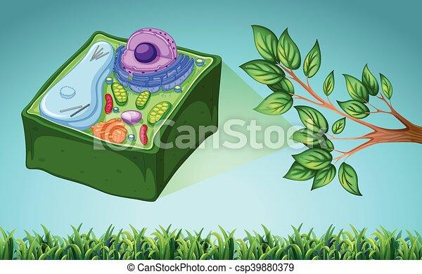 Célula, planta verde, hoja, ilustración ilustración con vectores ...