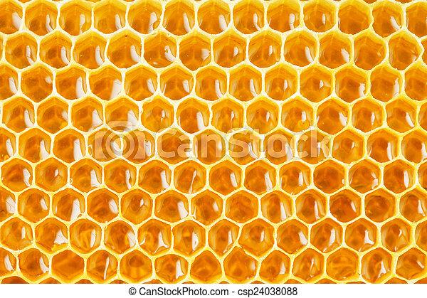 Células de miel de fondo natural - csp24038088