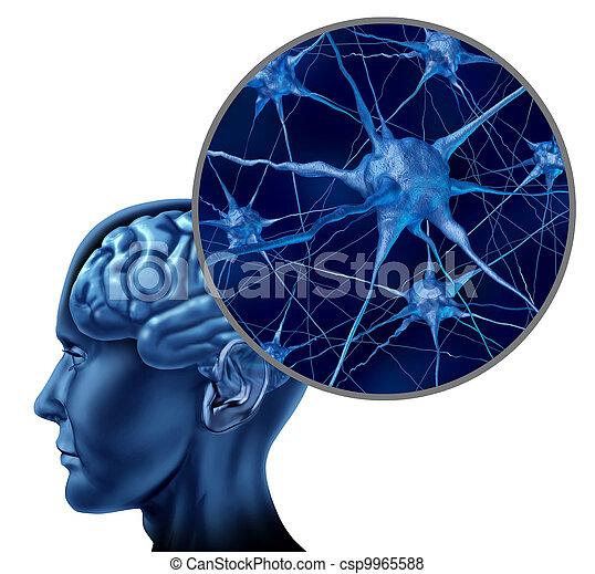 cérebro, símbolo médico, human - csp9965588