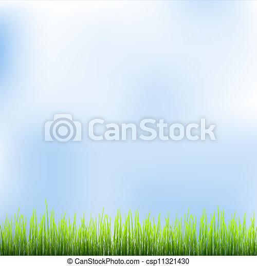 céu azul, capim, verde - csp11321430