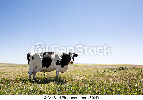 cópia, vaca, espaço - csp1469940
