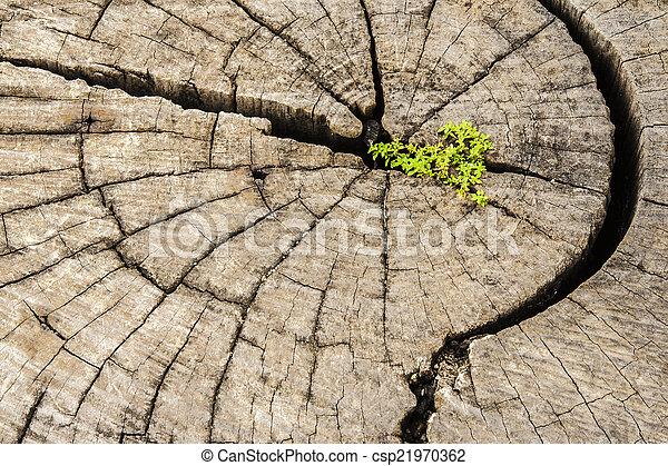 El éxito del liderazgo y el concepto de esperanza. Semillas duras creciendo en la vieja C - csp21970362