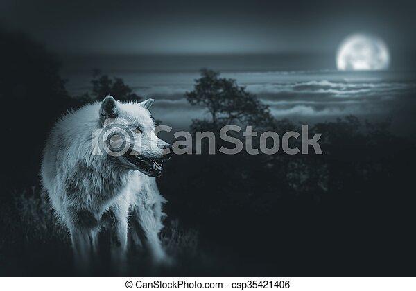 caça, lobo, lua cheia - csp35421406