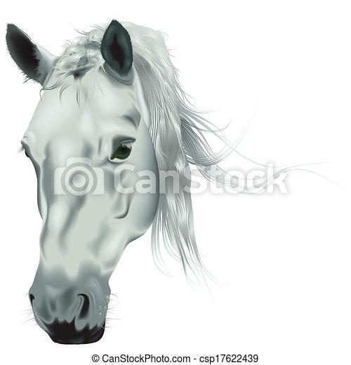 Caballo blanco, cabeza. Cabeza, coloreado, ilustración, -, caballo ...