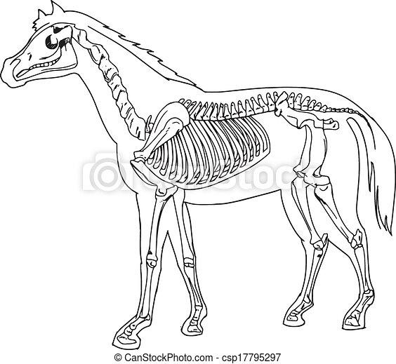Diagrama, caballo, esqueleto.