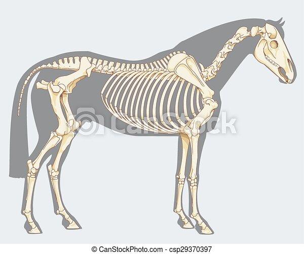 Caballo, esqueleto. Azul, caballo, científico, cielo, -, aislado ...